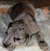 Boy puppy